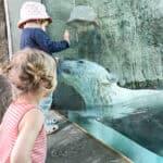 børn kigger på isbjørn