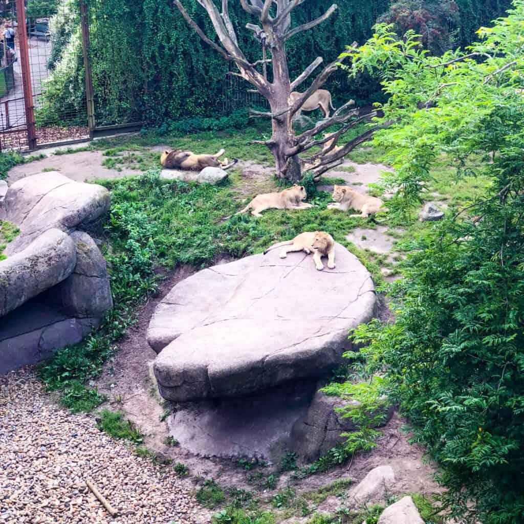 aalborg-zoo-1-4